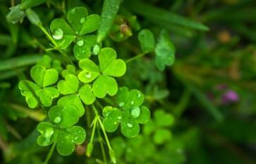 Celebrate St. Patrick's Day The Natural Way