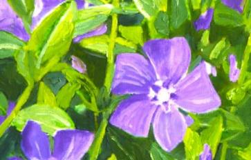 Your Guide To Summer Flowers: Periwinkle
