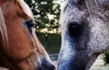 Transformation Through Equine Facilitated Learning