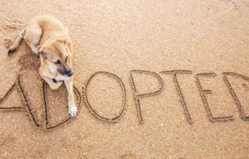 Before You Adopt: What To Consider When Choosing A Dog