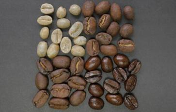 Coffee 101: What to Expect from Your Local Roaster