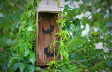 How To Build A Bat House & Attract Bats To Your Yard