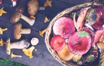 Wild Edible Mushrooms: Bolete Bonanza