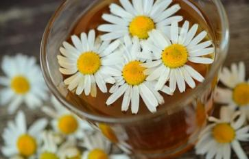 10 Therapeutic Uses of Chamomile Flowers