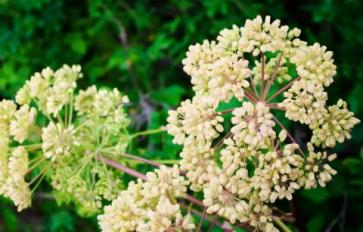 Medicinal Plants To Start In Your Fall Garden