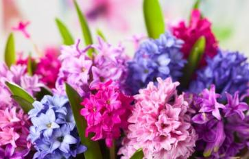 Your Guide To Summer Flowers: Hyacinth
