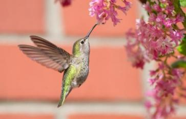 Build A Bird-Friendly Backyard With Native Plants