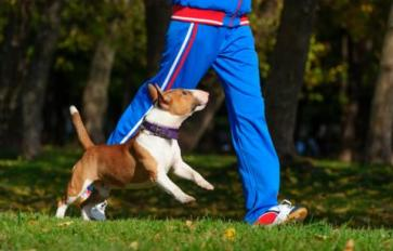 Tips & Tricks For Running With Your Dog