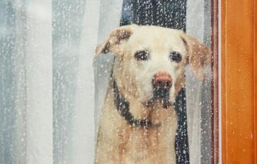 Rainy Day? 9 Indoor Games & Activities For Dogs