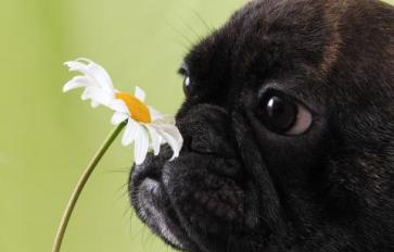 Natural Remedies For Your Dog's Allergies