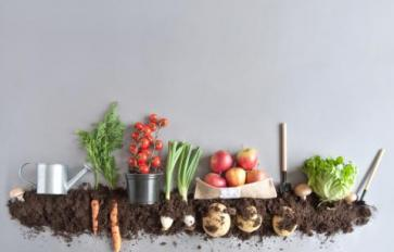 Composting Tips, Tricks & Hacks
