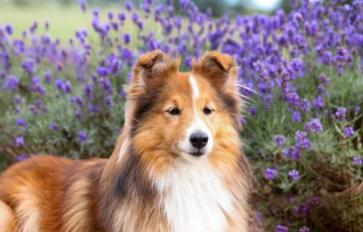 The Botanical Dog: Calming Herbs For Your Nervous Canine