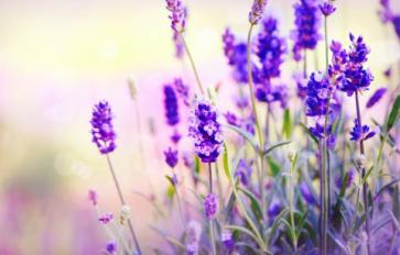 5 Lovely Uses For Lavender: Elixirs, Skin Scrubs & More