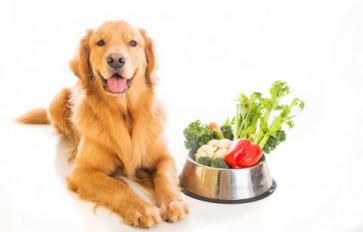Try These 8 Healthy Pet Treats