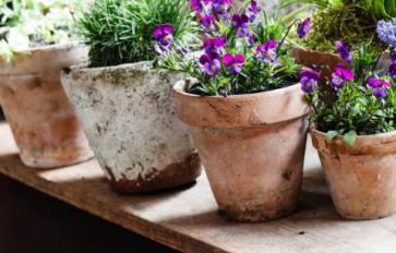 How To Grow An Entire Garden In Containers