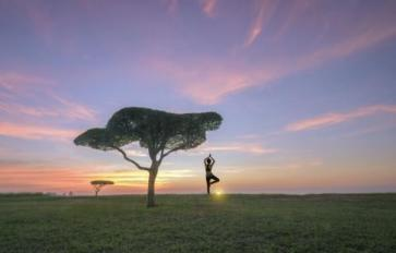 Yoga's Spirited Tree: The 8 Limbs Of Yoga