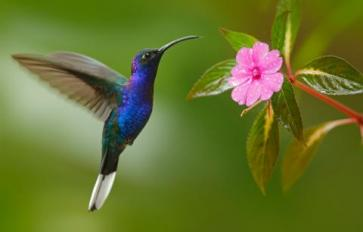 Attract Hummingbirds With These Plants
