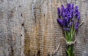 Staying Calm & Focused: 7 Botanicals For Day-To-Day Anxiety